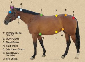 Reiki and chakra work is highly effective with horses. This is becoming a cornerstone of my therapy practice. #onelittlefishiemassageandbodywork