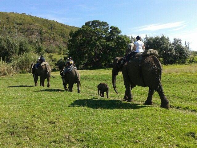Elephant ride @Botlierskop, Mosselbay, South Africa