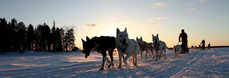 Huskysafari in Vuokatti, Finnland