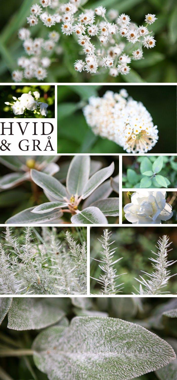 Havedrømme: Hvid og grå