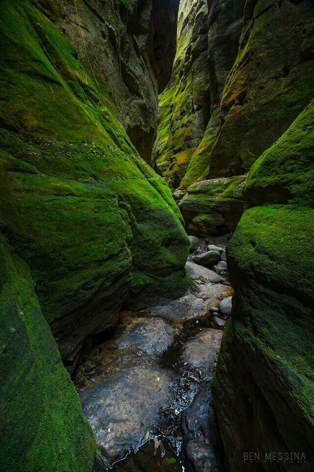 Ben Messina: Carnarvon Gorge, QLD