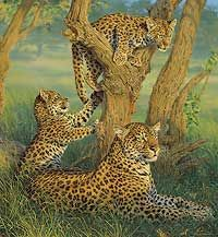 FAMILY OUTING - LEOPARDS by Lee Kromschroeder