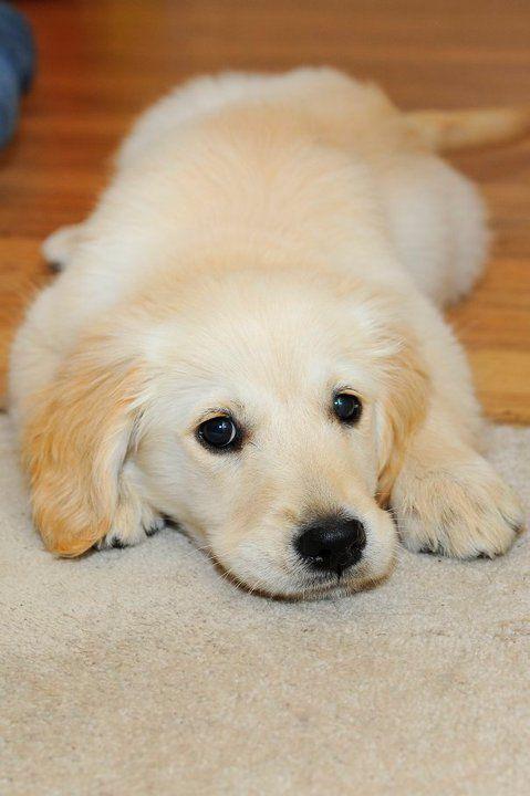 Les chiens, rien de plus mignon