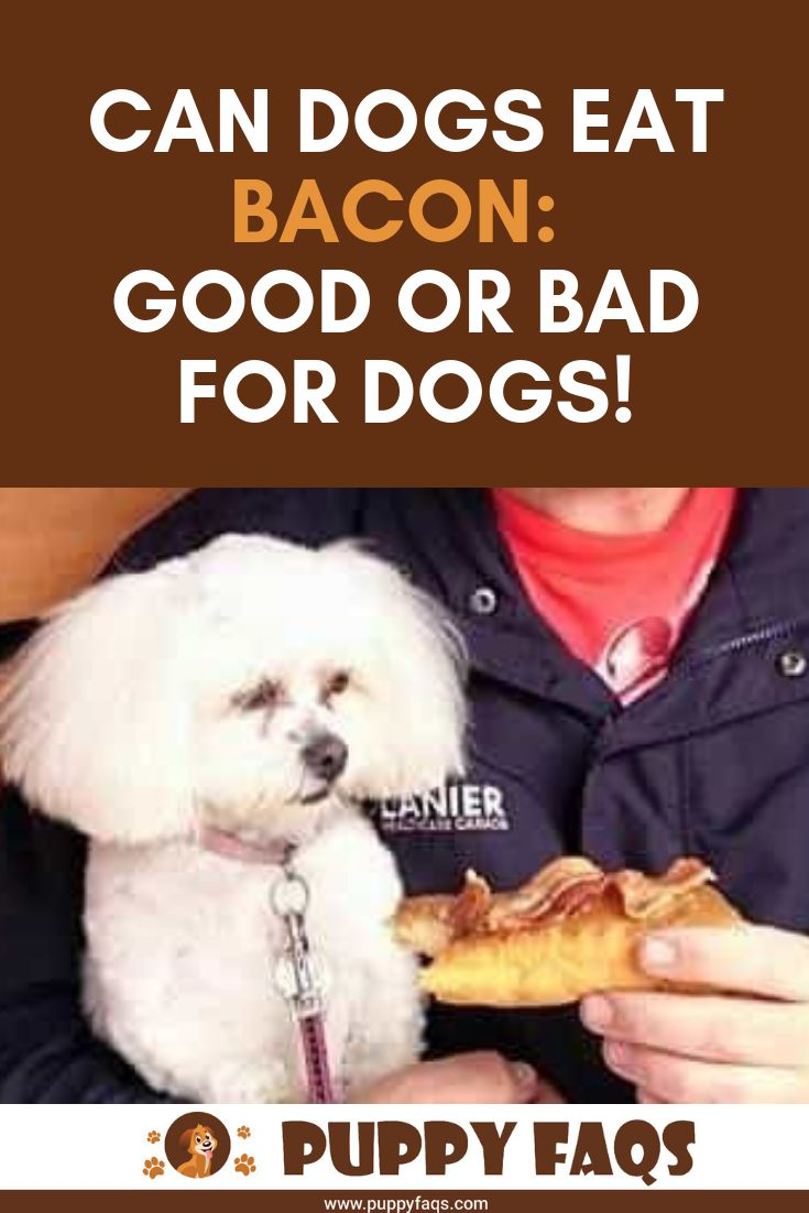 Can Dogs Eat Bacon Good Or Bad For Dogs Can Dogs Eat Dog Eating Bacon
