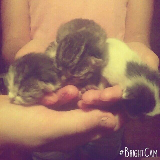 Kotełki :*