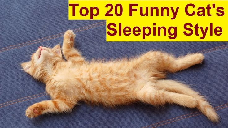 Top 20 Funny Cats Sleeping Style [part – 2] - Cats Sleeping in Weird Pos...