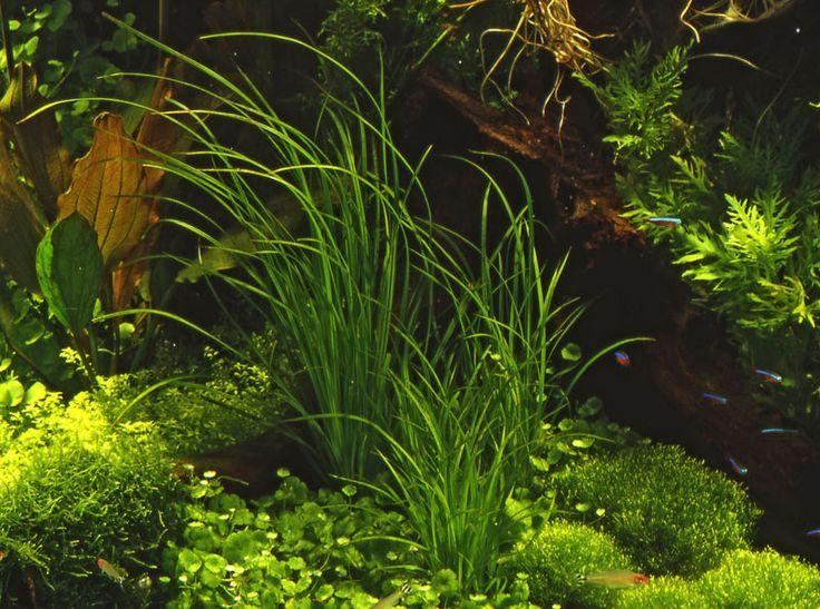 die besten 17 ideen zu aquarium unterschrank auf pinterest, Hause ideen
