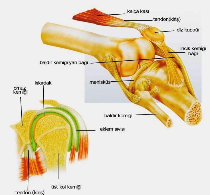 Eklem Temizliği,Eklem Temizliği Nasıl Yapılır,Kemik Temizliği