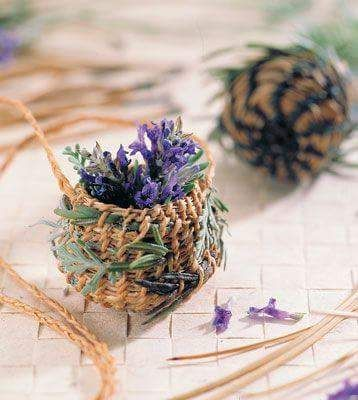 lavender in little pots