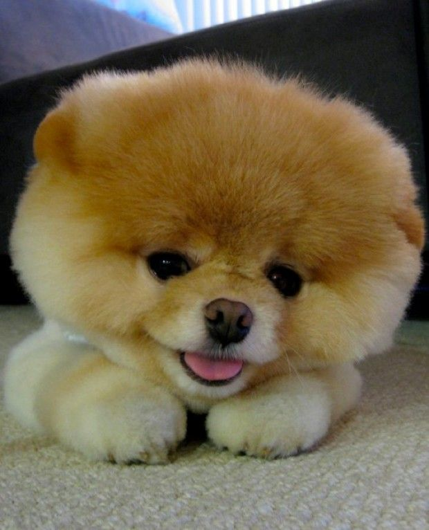 i'm sorry - i love boo...and someday maybe he will live in my house with me