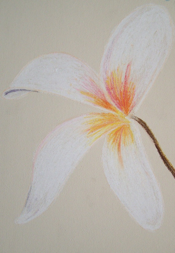 White Lilly  Oil Pastel Drawing by happygraphics on Etsy, £9.99