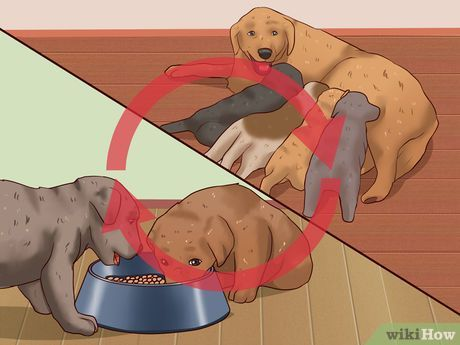 How to Wean Puppies: 10 Steps (with Pictures) - wikiHow
