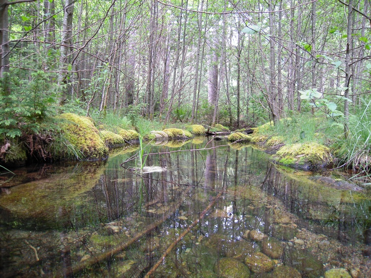 Some Creek that flows into Some River  Chilliwack, BC (Photo by Aryan Baines)