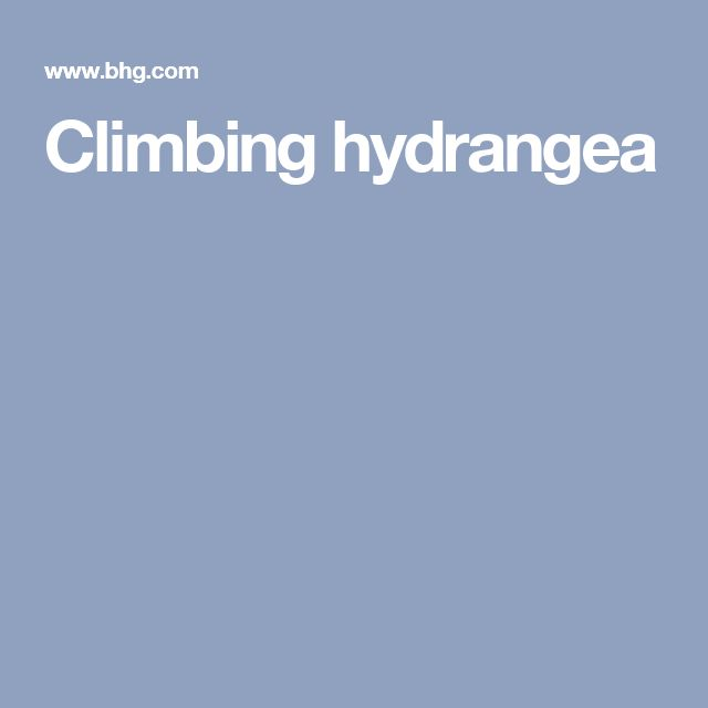 39 Ingenious Diagrams For Your Home And Garden Projects: 25+ Best Ideas About Climbing Hydrangea On Pinterest