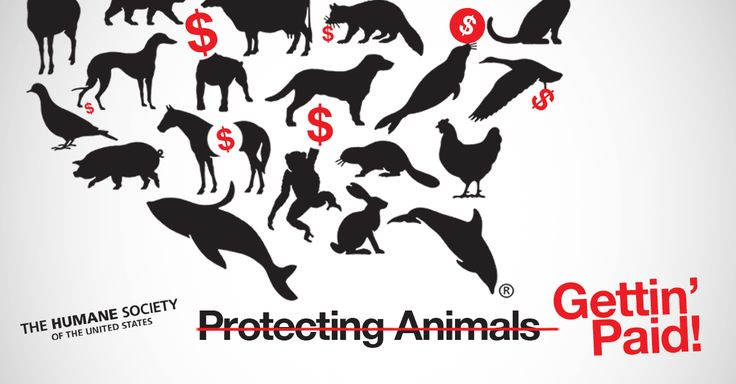 Breaking: HSUS Loses Charity Rating. Charity Navigator posts Donor Advisory warning for HSUS.
