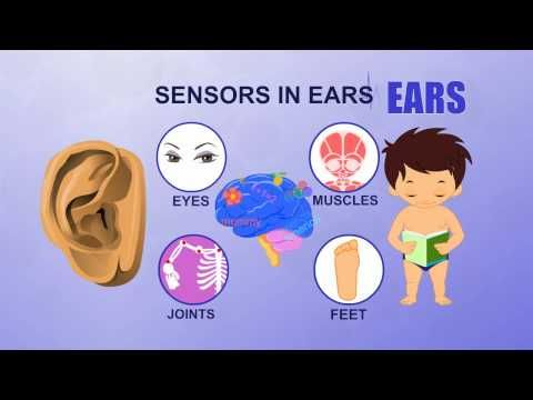 Learn about Human Body Parts For Kids - EARS