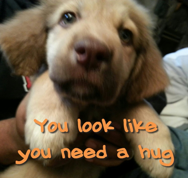 You look like you need a hug Feel free to use this image