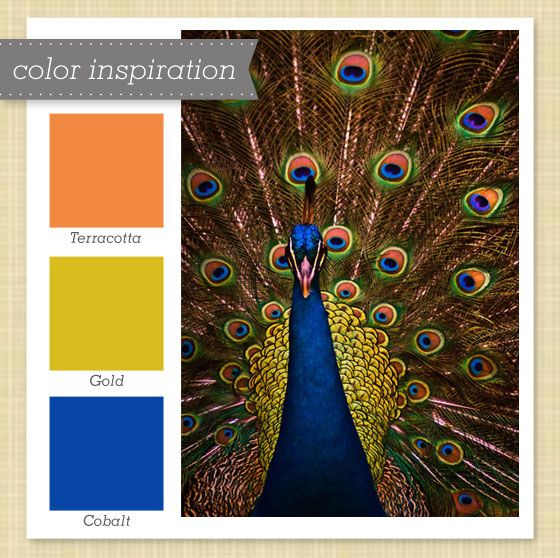 """color scheme idea - replace Gold with the bright green around the """"eyes"""" in the feathers?"""