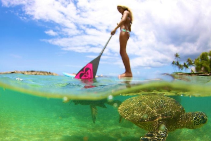 From roxy girl SUP http://www.vaninawalsh.com/  KM Hawaii Stand up paddle sea turtles