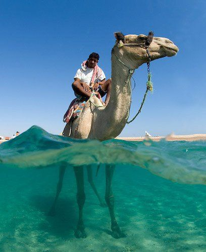 What better way to ride a camel?!