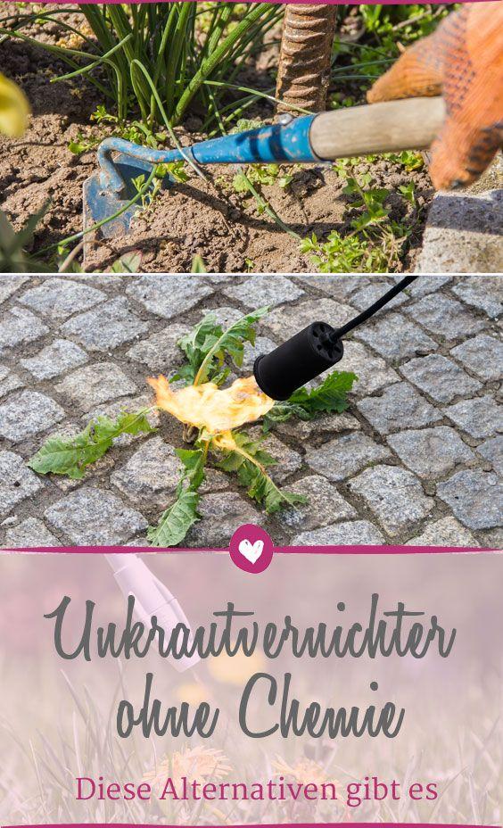 Naturliche Alternativen Zum Unkrautvernichter Pflanzen Tipps Zum