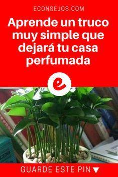 Perfumar la casa   Aprende un truco muy simple que dejará tu casa perfumada   Aprende un truco muy simple que dejará tu casa perfumada.