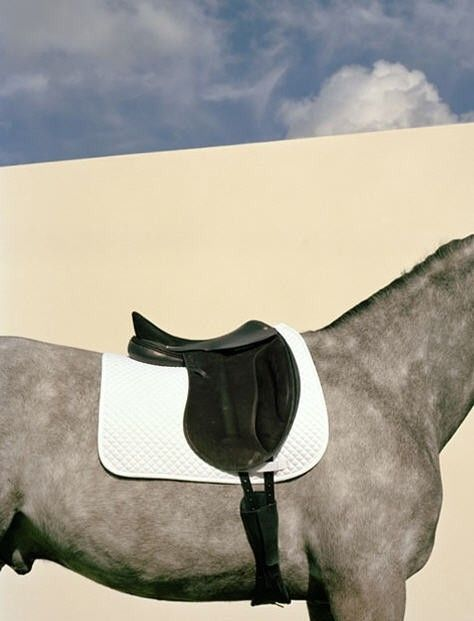 Hermes saddle  www.goldenrabbitsaddlery.com