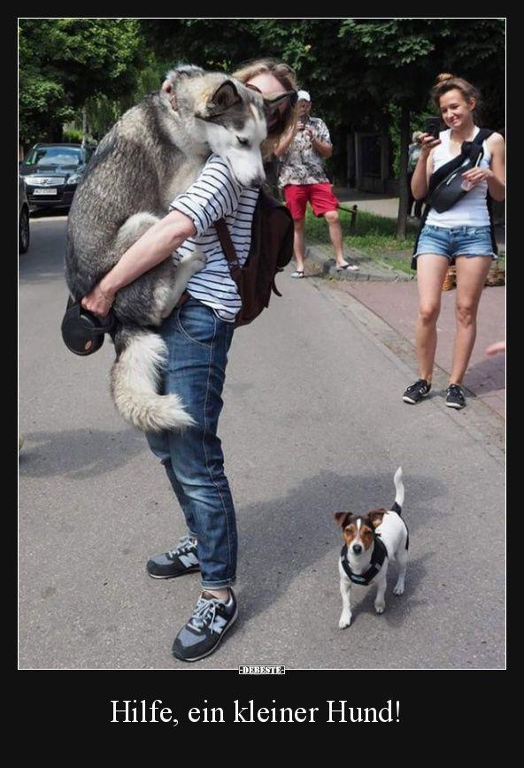 Beste Bilder, lustige Tiere – Sprüche – #Beste #Bilder #lustige # Sprüche #Ti …  – Tiere Ideen