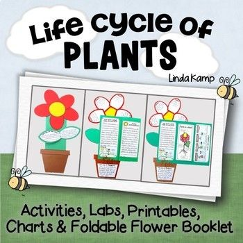 science: plant life cycle: plants: This complete science unit for teaching about the plant life cycle integrates writing and science for your first grade, second grade or third grade classroom. Loaded with over 20 creative and engaging, hands-on science and writing activities it's easy to teach with 2 weeks of detailed lesson plans, teacher's notes and management tips. Lesson visuals, charts and a plant life cycle bulletin board give you literally everything you need to teach a fun…
