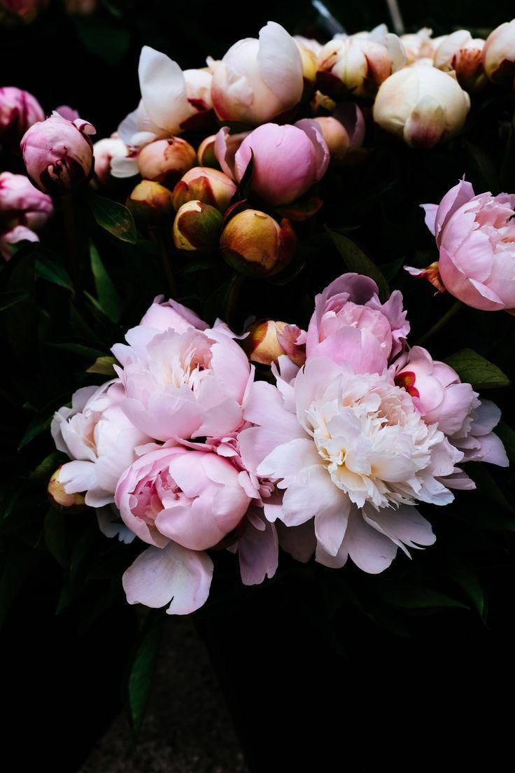 Workshop Blumenstyling & Fotografie