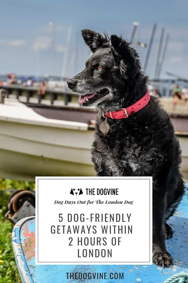 5 Dog Friendly Getaways Within 2 Hours Of London Dog Travel