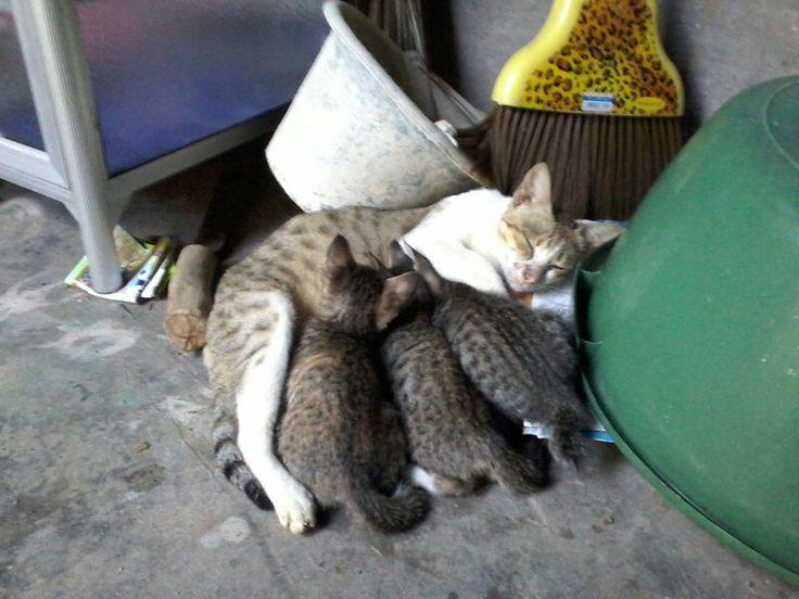 Mom cats