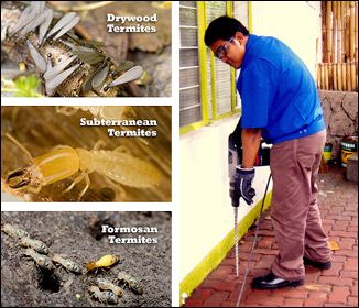 It is a common misconception that getting the building treated for termite is unhealthy and dangerous for human health. These points give a better understanding of Termite Treatment in Sydney.