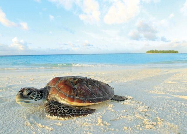 Traumhafte Inselperle im Indischen Ozean | Sparen Sie bis zu 70% auf Luxusreisen | Secret Escapes