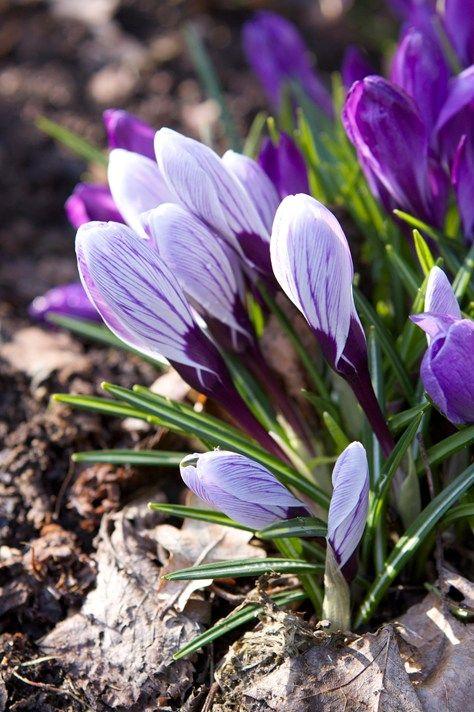 Trädgårdskalender - mars | Blomsterlandet.se