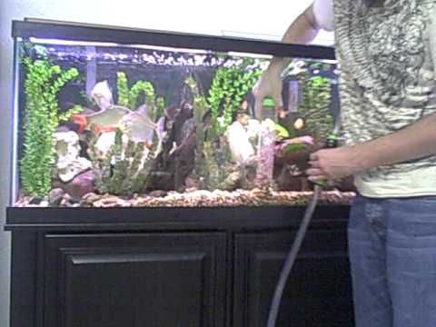 Best 25 fish tank gravel ideas on pinterest betta for How to clean a fish tank
