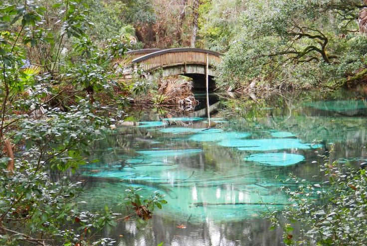 nature trail bridge at Jupiter Springs