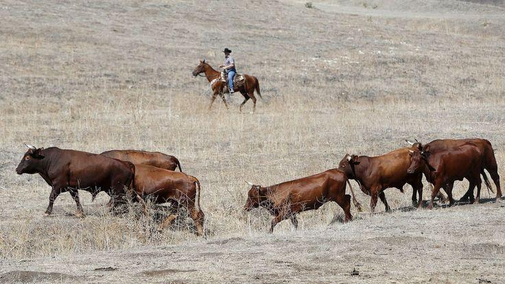 Despite surrounding development, South O.C. cowboys are