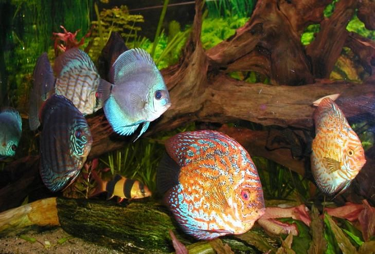 44 best en aquarium images on pinterest fish aquariums aquariums and fish tanks. Black Bedroom Furniture Sets. Home Design Ideas