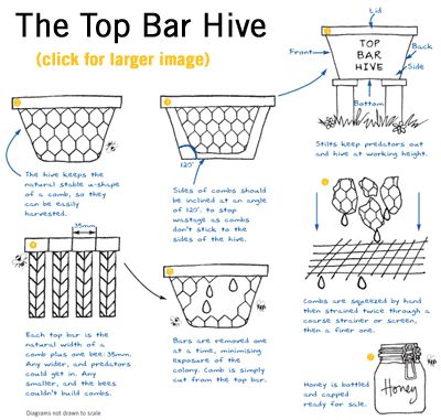 """Kenyan 'top-bar' hive and the """"Greek Basket"""" via Practical Action help South Africa's beekeepers increase production from 6-10 times and better market it."""