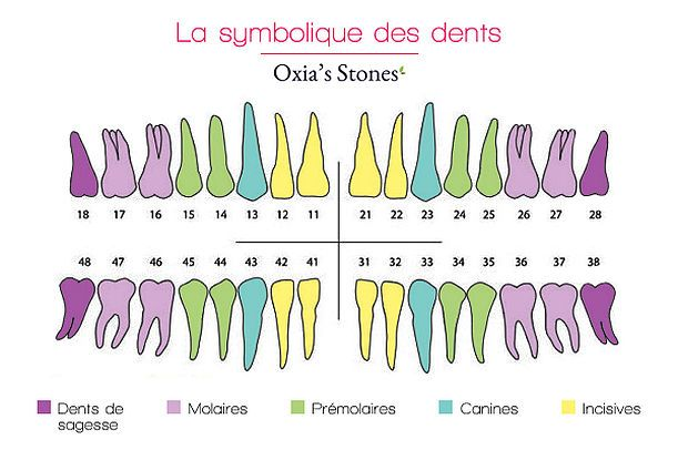 La symbolique des dents