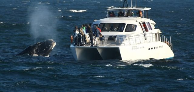 Experience It   South Africa   #Whale and Boat