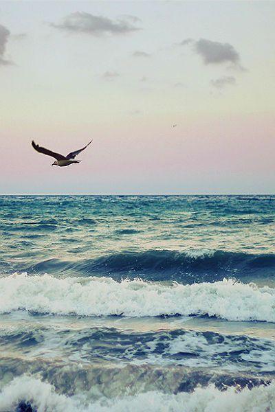 Ocean & Sea // Bird flying over ocean waves with a dusky sky