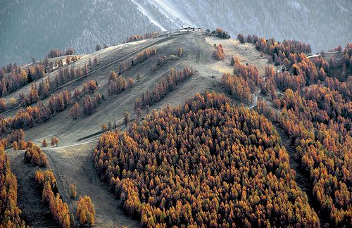 Trees. Lots of trees.: Inspiration, Life, Style, Autumn, Forest Mountains, Colors, Posts, Landscape, Color Photography