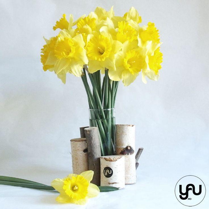 Aranjament floral NARCISE si LEMN _ yauconcept _ elenatoader