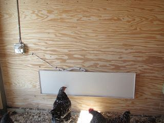 """Sweeter Heater chicken coop heater, AND, it is plugged into a """"Thermocube""""  A Thermocube looks like a powerstrip, but it has a built-in thermostat which will turn the heater on when it gets down to 20 degrees...and off again when it hits 30."""