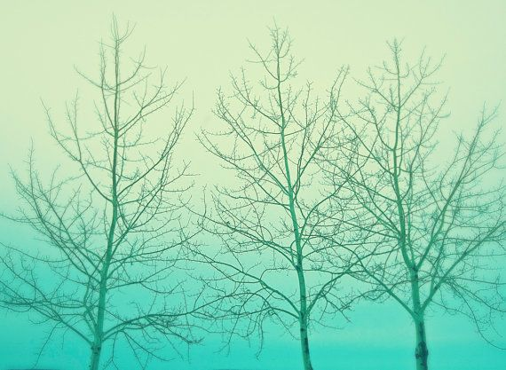 Tree Photograph - Mint - Three - Home Decor - Abstract - Nature- Landscape - Wall Art - Warm - Decorating