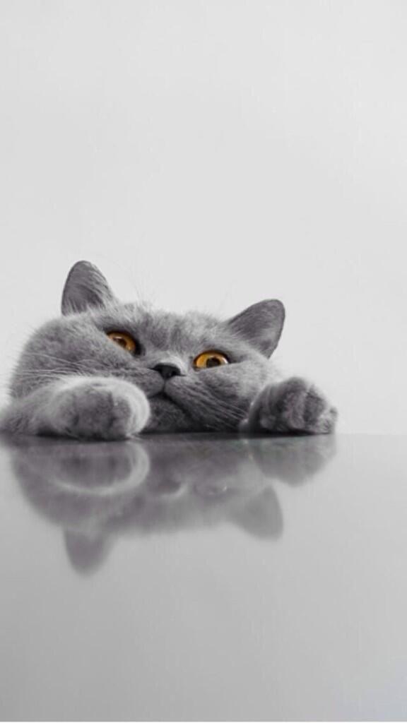 cat (keren-seg)
