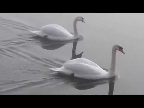 SWANS - In the West Kevin MacLeod