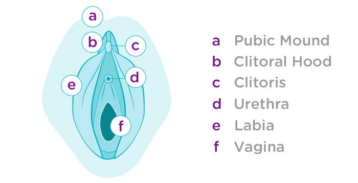 Female Anatomy - Learn About the Reproductive System - Lunette